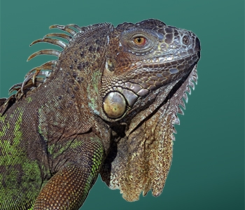 Image of your reptile deserves OASIS award winning products