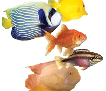 Image of kordon aquarium & pond products Trusted Solutions Since 1961